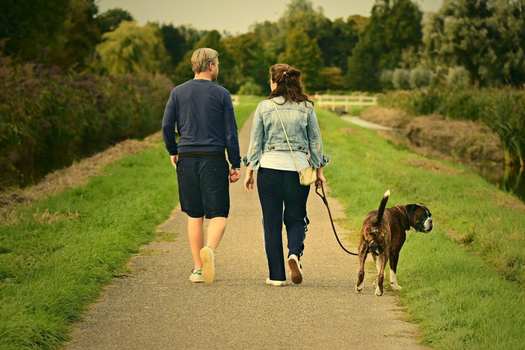 בעלי כלבים, שימו לב טיפים לטיול מוצלח עם הכלב