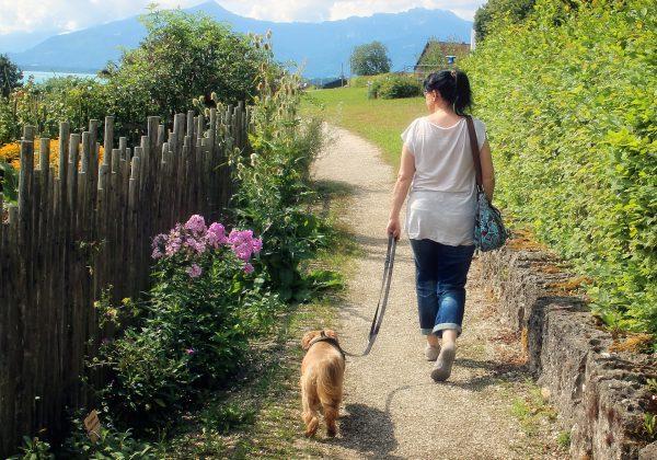 בעלי כלבים, שימו לב: טיפים לטיול מוצלח עם הכלב