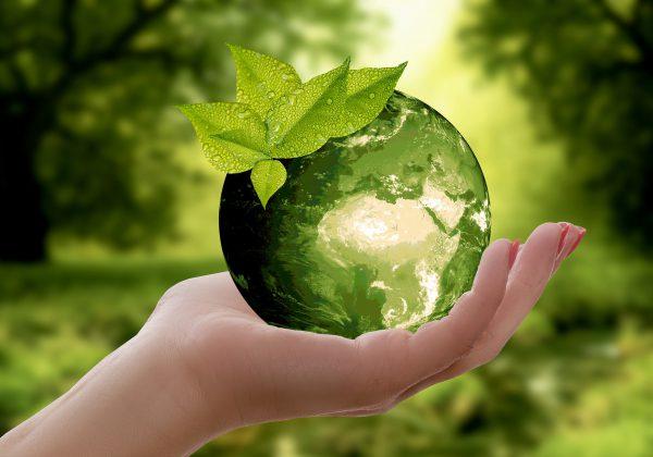 ידידותי לסביבה: כך תהפכו את הבית שלכם לירוק